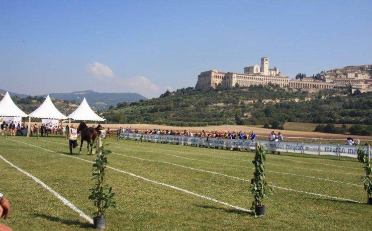 Assisi Endurance Lifestyle Vet-Gate